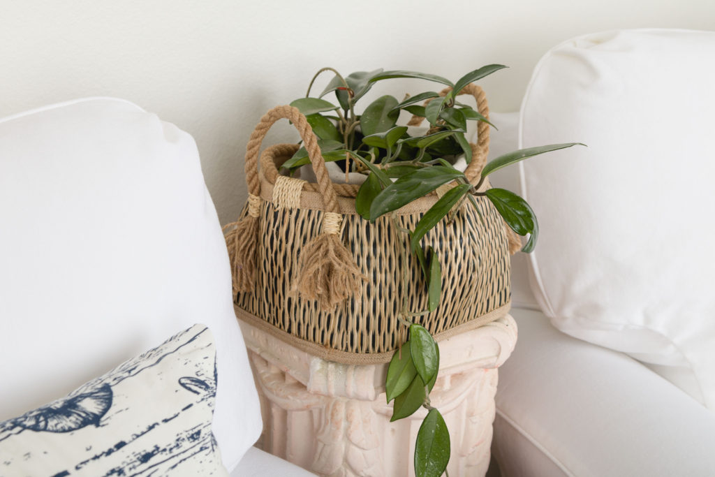 Hoya plant in basket, organic accessory