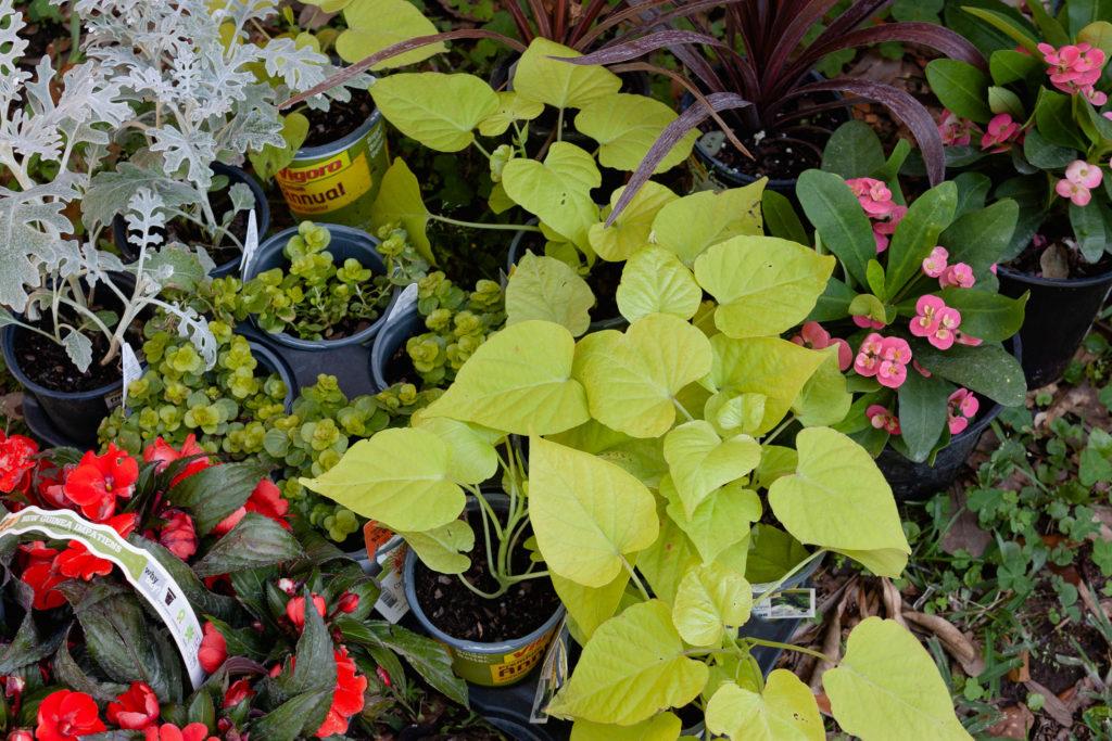 Plants for hanging baskets, easy yard makeover