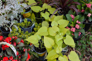 Plants for hanging baskets, easy yard makeover