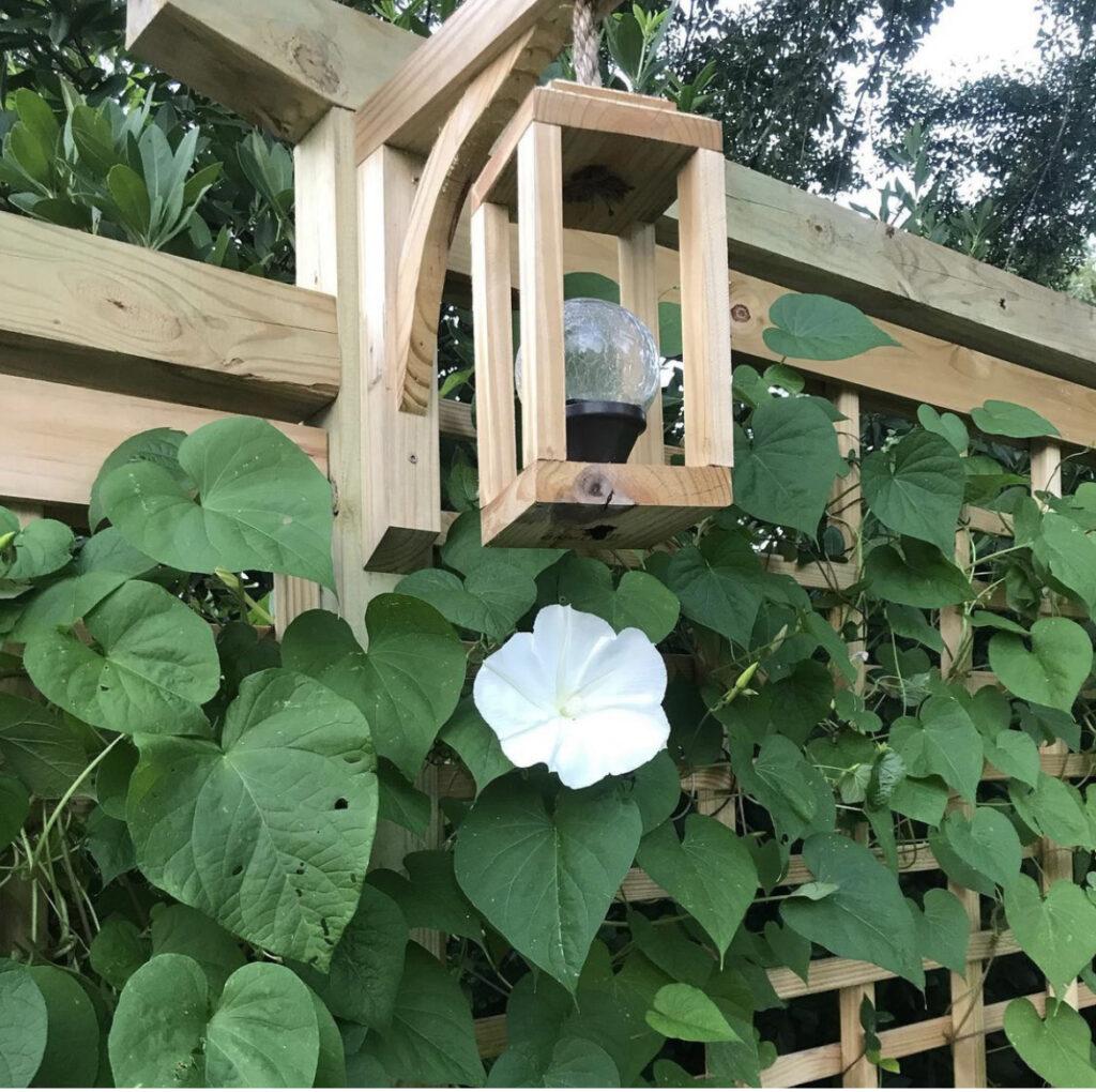 DIY Trellis with Moon Flowers