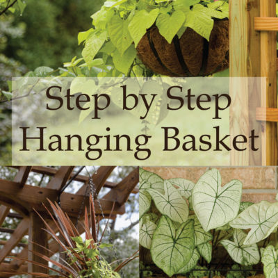 Step by Step Hanging Baskets