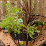 Step 5 hanging baskets, everything you need to know to create your dream garden
