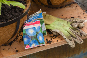 Step 6 hanging baskets, adding seeds for more wow!