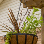 Hanging basket on trellis, instant flower garden