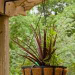 Hanging basket, easy step by step guide to create now