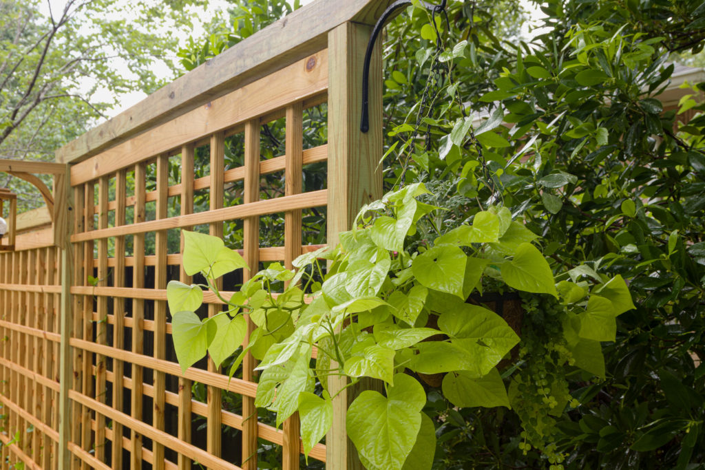 Trellis with hanging planters, easy step by step how to...