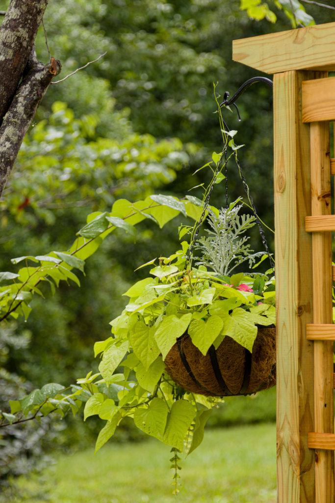 Hanging basket on trellis, step by step guide, garden update