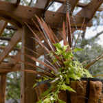 Trellis and hanging baskets, easy garden makeover