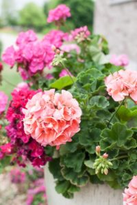 Jane's Summer Flower GardenTour, beautiful inspiration for your garden. garden tour