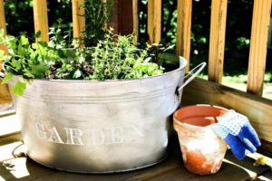 Michelle's Beautiful Herb Garden in Galvanized Bucket, pretty and useful herbs from a containergarden