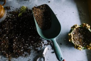 Paul's 14 Uses For Coffee Grounds in the Garden, easy gardening hacks