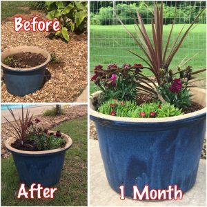 Trina's Backyard Facelift Bliss, garden tour, DIY gardens