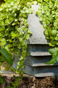 Created from concrete planter