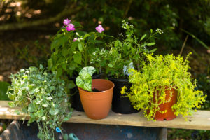 Shade to part-shade plants for container pots