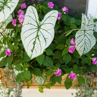 Window Box Flowers – Best Plants for Window Boxes