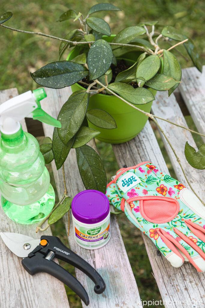 Hoya propagation supplies