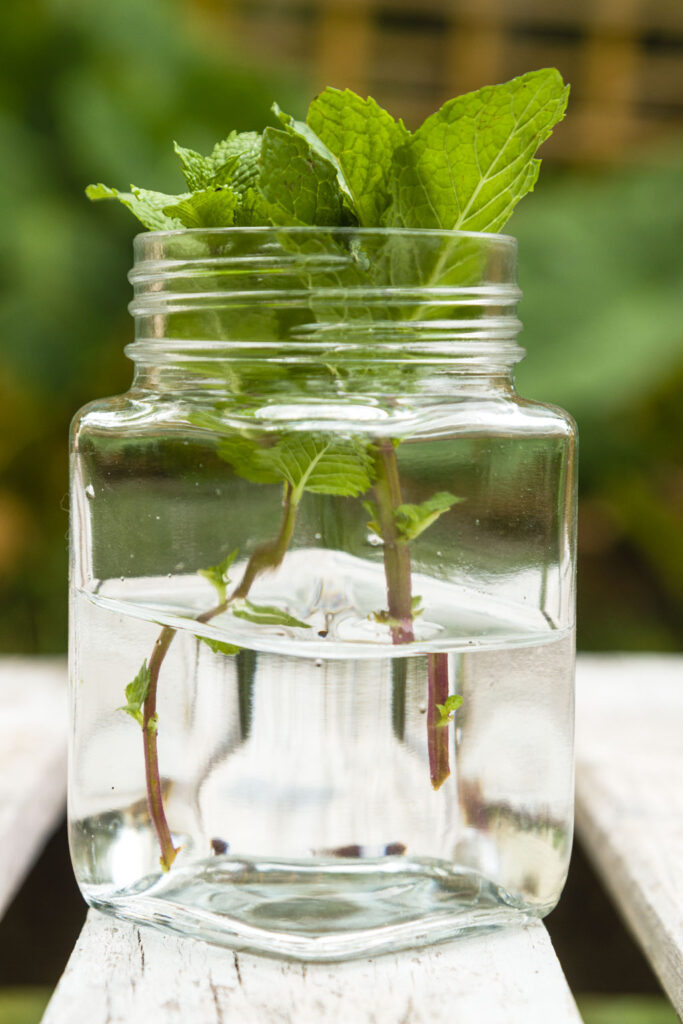 cuttings in jar of water