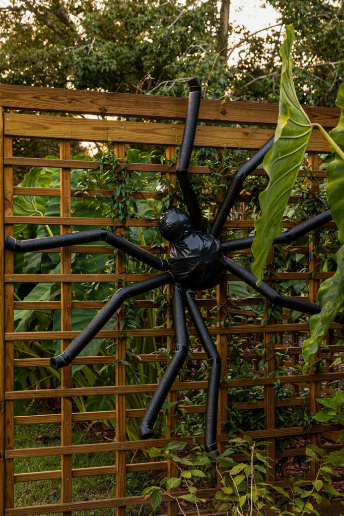 Huge Outdoor Spider hanging on a fence